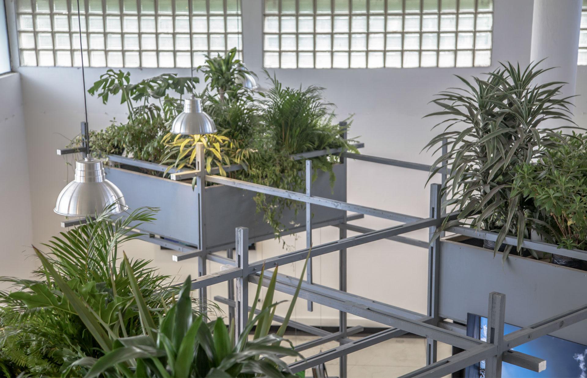 Instalación «Una Mirada al Bosque Vertical» Museo Leopoldo Rother 2018